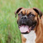 Boxer 9 ans : la sélection des bitonios les plus funs